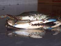 Jug's Seafood